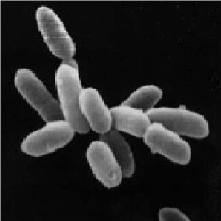 https://elgeran.info/files/front/Halobacteria.jpg...